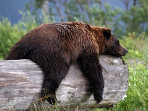 Sleepy-Bear