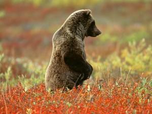 Standing-Bear