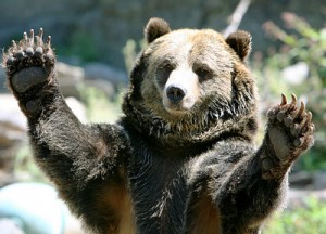 ThisBig-Bear
