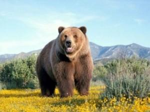 bears-cute-awesome1-4