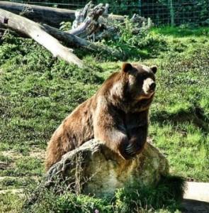 bears-cute-awesome2-12
