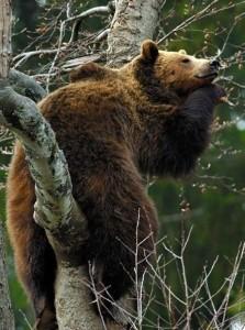 bears-cute-awesome2-25