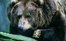 Excellent Bear