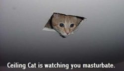 ceiling-cat-is-watching-you-masturbate
