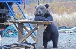 Bear Speech