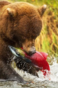 Fishing Trip Bear