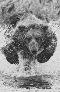 Leaping Wet Bear