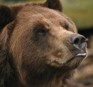 bears-cute-awesome1-11